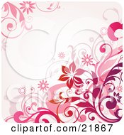 Pale Pink Background With Blooming Daisy Flowers Circles And Vines