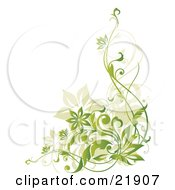 Clipart Picture Illustration Of Tan And Gradient Green Flowering Vines Over A White Background