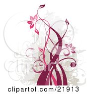 Twisting And Growing Pink And Red Vine With Blooming Flowers Over A Grunge Green Gray And White Background