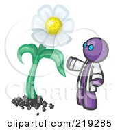 Royalty Free RF Clipart Illustration Of A Purple Man Scientist Admiring A Giant White Daisy Flower