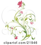 Clipart Picture Illustration Of A Delicate Green Plant With Pink Blooming Flowers On A White Background