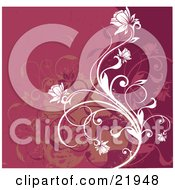 Red And Pink Background With White Flowering Vines