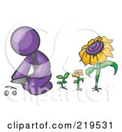 Purple Man Kneeling By Growing Sunflowers To Plant Seeds In A Dirt Hole In A Garden