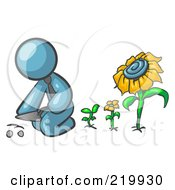 Denim Blue Man Kneeling By Growing Sunflowers To Plant Seeds In A Dirt Hole In A Garden