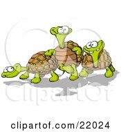 Three Goofy Tortoise Turtles One Leaning Against Another