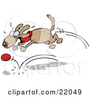 High Strung Brown Dog With His Tongue Flying In The Breeze, Chasing After A Bouncing Ball