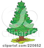 Royalty Free RF Clipart Illustration Of A Wild Lush And Green Coniferous Tree With Pinecones by visekart