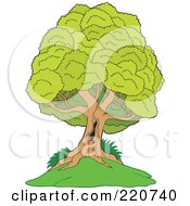 Royalty Free RF Clipart Illustration Of A Mature Lush Tree With A Hole In The Trunk On A Hill