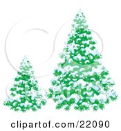 Clipart Illustration Of A Small And Large Evergreen Trees Flocked In Snow On A Winter Day