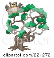 Royalty Free RF Clipart Illustration Of An Owl In A Pine Tree