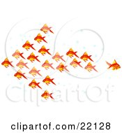 Poster, Art Print Of Clipart Illustration Of A Group Of Goldfish With Bubbles Schooling In The Shape Of An Arrow Pointing Left One Fish Swimming Away In A Different Direction