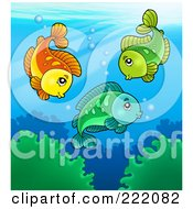 Royalty Free RF Clipart Illustration Of Three Cute Freshwater Fish Swimming Above Aquatic Plants