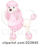Royalty Free RF Clipart Illustration Of An Adult Pink And Cream Standard Poodle by Pushkin