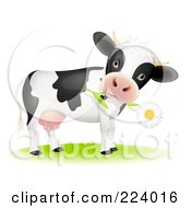 Royalty Free RF Clipart Illustration Of A Cute Cow With A Daisy Flower In Its Mouth by Oligo