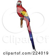 Royalty Free RF Clipart Illustration Of A Perched Scarlet Macaw With Its Body In Profile And Face Looking Outwards