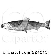 Royalty Free RF Clipart Illustration Of A Black And White Trout Fish 3 by BestVector