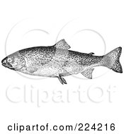 Royalty Free RF Clipart Illustration Of A Black And White Trout Fish 1 by BestVector