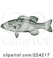 Royalty Free RF Clipart Illustration Of A Green Smallmouth Bass Fish by BestVector