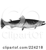 Royalty Free RF Clipart Illustration Of A Black And White Trout Fish 2 by BestVector