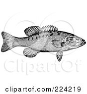 Royalty Free RF Clipart Illustration Of A Black And White Smallmouth Bass Fish by BestVector