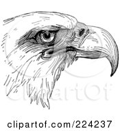 Royalty Free RF Clipart Illustration Of A Black And White Eagle Head Sketch by BestVector