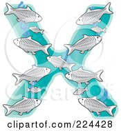 Group Of Xray Fish In The Shape Of The Letter X