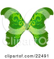 Beautiful Green Butterfly With Yellow Near The Body On A White Background