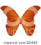 Clipart Illustration Of A Beautiful Orange Butterflie With Gradient Tones On A White Background