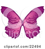 Pretty Purple And Pink Butterfly With Stripes And Dots On A White Background
