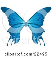 Delicate Blue Butterfly With Spots On The Wings On A White Background