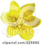 Royalty Free RF Clipart Illustration Of A 3d Yellow Buttercup Flower