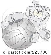 Gray Bulldog Mascot Reaching Up And Grabbing A Volleyball