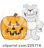 Gray Bulldog Mascot With A Halloween Jackolantern