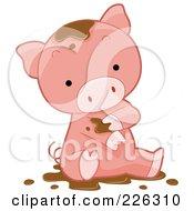 Cute Pig Bathing In Mud