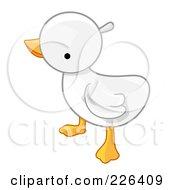 White Baby Duck