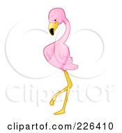 Pink Flamingo Standing