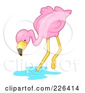 Pink Flamingo Stepping Into Water