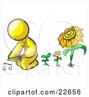 Yellow Man Kneeling By Growing Sunflowers To Plant Seeds In A Dirt Hole In A Garden