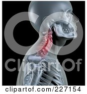 Royalty Free RF Clipart Illustration Of A 3d Skeleton Profile With Neck Bones Highlighted In Red by KJ Pargeter