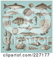 Digital Collage Of Vintage Fish And Sea Creatures On Blue
