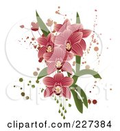 Pink Striped Orchids With Grunge Splatters Leaves And Drops