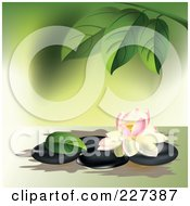 Royalty Free RF Clipart Illustration Of A Pink And White Lotus Flower On Spa Stones Under Leaves