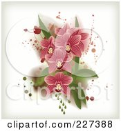 Pink Striped Orchids With Grungy Splatters Leaves And Drops
