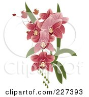 Royalty Free RF Clipart Illustration Of Pink Striped Orchids With Leaves And Drops by Eugene