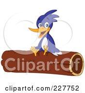 Cute Woodpecker Sitting On A Log