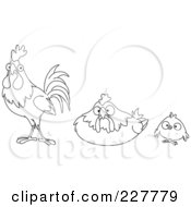 Coloring Page Outline Of A Chick Hen And Rooster