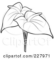 Royalty Free RF Clipart Illustration Of A Coloring Page Outline Of Two Anthurium Flowers