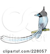 Royalty Free RF Clipart Illustration Of A Paradise Fly Catcher Bird Perched by Lal Perera