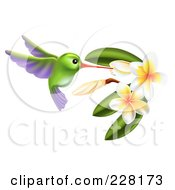 Royalty Free RF Clipart Illustration Of A Green And Purple Hummingbird With Plumeria Flowers by AtStockIllustration