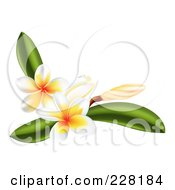 Royalty Free RF Clipart Illustration Of Plumeria Flowers And Leaves